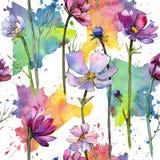 Teste padrão de flor do áster do Wildflower em um estilo da aquarela ilustração stock