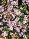 Teste padrão de flor do campo fotografia de stock