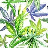Teste padrão de flor do cannabis do Wildflower em um estilo da aquarela ilustração do vetor