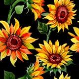 Teste padrão de flor do girassol do Wildflower em um estilo da aquarela ilustração royalty free