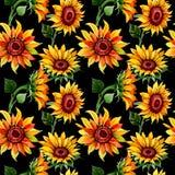 Teste padrão de flor do girassol do Wildflower em um estilo da aquarela ilustração stock