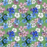 Teste padrão de flor do miosótis do Wildflower em um estilo da aquarela ilustração royalty free