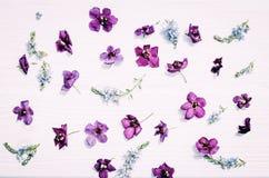 Teste padrão de flor para o cartão Fotografia de Stock Royalty Free