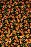 Teste padrão de flores útil para texturas Imagens de Stock Royalty Free