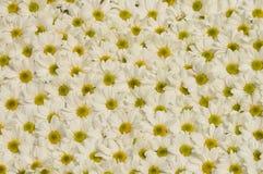 Teste padrão de flores Foto de Stock Royalty Free