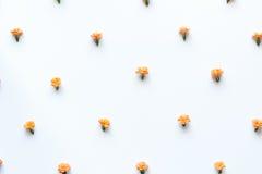 Teste padrão de flores alaranjado Foto de Stock Royalty Free