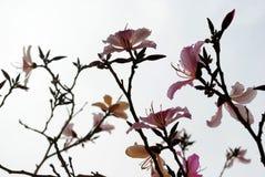 Teste padrão de flores cor-de-rosa Imagens de Stock Royalty Free