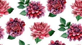 Teste padrão de flores da aquarela da dália Imagem de Stock Royalty Free
