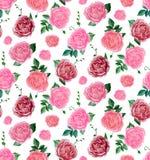 Teste padrão de flores da aquarela das peônias Imagens de Stock Royalty Free