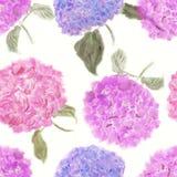 Teste padrão de flores da hortênsia Imagens de Stock