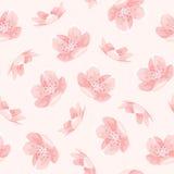 Teste padrão de flores japonês da mola de sakura da cereja cor-de-rosa Fotografia de Stock Royalty Free