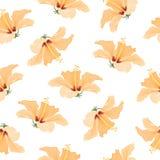 Teste padrão de flores tropical amarelo brilhante do hibiscus Foto de Stock