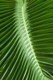 Teste padrão de folhas de palmeira tropicais. Imagens de Stock