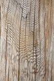 Teste padrão de madeira abstrato. Imagens de Stock Royalty Free