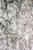 Teste padrão de madeira velho da grão em bonito preto e branco naturalmente Imagens de Stock