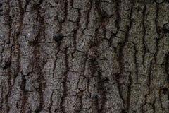 Teste padrão de madeira velho do fundo da textura da árvore Fundo foto de stock