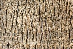 Teste padrão de madeira velho do fundo da textura da casca de árvore Fotografia de Stock
