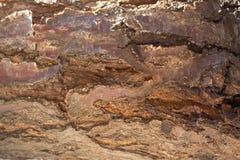 Teste padrão de madeira velho do fundo da textura da casca de árvore Foto de Stock