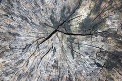 Teste padrão de madeira velho textured Fotografia de Stock