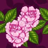 Teste padrão de Rosa que tira à mão Imagens de Stock Royalty Free