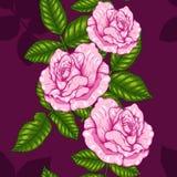 Teste padrão de Rosa que tira à mão Fotografia de Stock Royalty Free