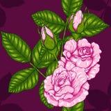 Teste padrão de Rosa que tira à mão Fotos de Stock Royalty Free