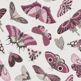 Teste padrão desenhado à mão sem emenda das borboletas Foto de Stock Royalty Free