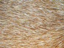 Teste padrão do cabelo Imagem de Stock Royalty Free