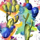 Teste padrão do cacto do Wildflower em um estilo da aquarela ilustração royalty free