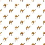 Teste padrão do camelo Foto de Stock Royalty Free