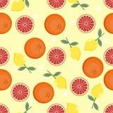 Teste padrão do citrino Fundo da fruta Fundo brilhante do verão com limão e laranja Foto de Stock