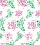 Teste padrão do colibri Fotos de Stock