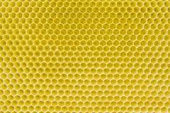 Teste padrão do favo de mel Imagem de Stock Royalty Free