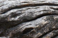Teste padrão do fundo de madeira da textura da deterioração fotografia de stock royalty free