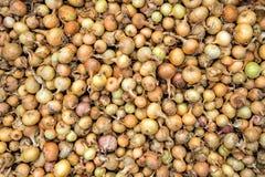 Teste padrão do fundo natural das cebolas da semente Foto de Stock Royalty Free