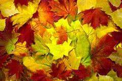 Teste padrão do fundo do outono Fotografia de Stock