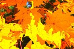 Teste padrão do fundo do outono Fotografia de Stock Royalty Free
