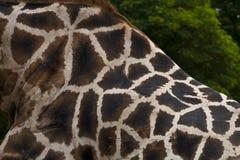 Teste padrão do girafa Foto de Stock