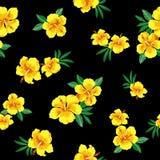 Teste padrão do hibiscus Fotos de Stock