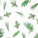 Teste padrão do inverno de árvores de Natal no fundo branco Conceito do Natal ou do ano novo Configuração lisa, vista superior Imagem de Stock Royalty Free