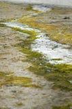 Teste padrão do musgo e da areia Fotografia de Stock