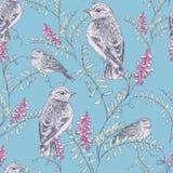 Teste padrão do pássaro e de flor Imagens de Stock Royalty Free