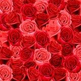 Teste padrão do papel de parede das rosas Foto de Stock