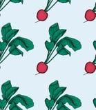 Teste padrão do rabanete Ilustração foto-realística do vetor do alimento biológico do rabanete do vegetal saudável fotografia de stock
