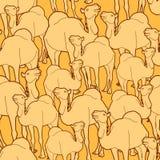 Teste padrão do rebanho do camelo Imagem de Stock