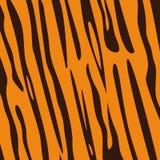 Teste padrão do tigre Foto de Stock Royalty Free