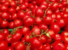 Teste padrão do tomate Imagem de Stock