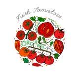 Teste padrão do tomate do vetor Imagem de Stock
