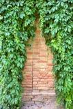 Teste padrão do triângulo na parede coberta pela hera foto de stock