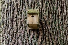 Teste padrão do tronco de árvore Fotos de Stock Royalty Free